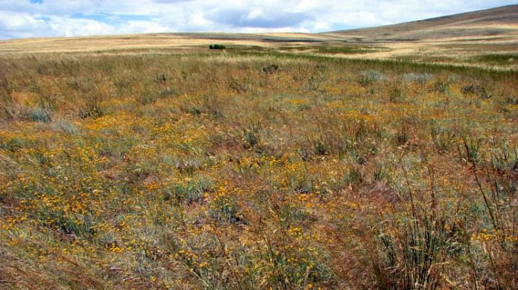 Remnant grassland in Mokota Conservation Park