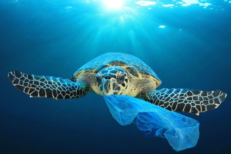 Turtle-Eating-Plastic_Shutterstock